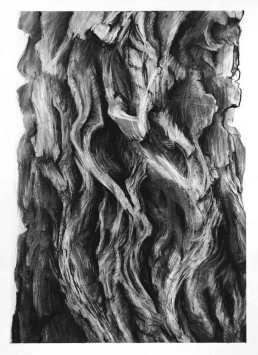 Bark Rhythyms charcoal on paper, 65 x 47cm